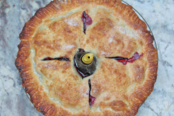 Pie-bird-birds-eye-view