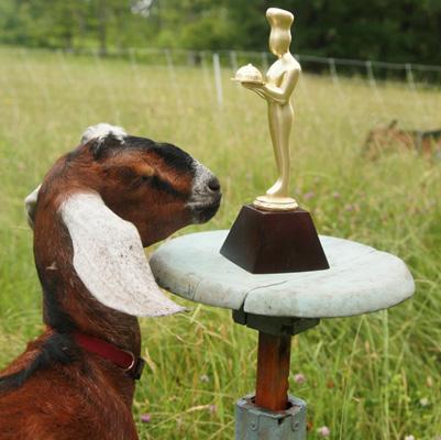 Big Picture Farm Nubian goat named Junebug