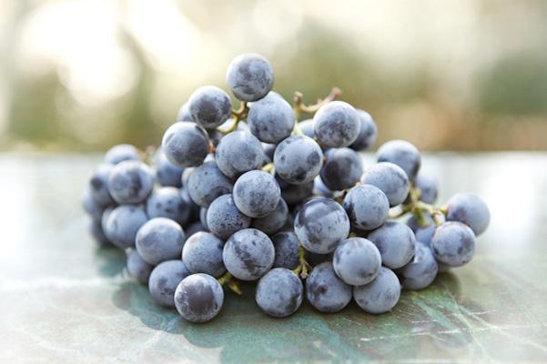 grapes_1 copy