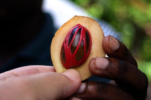 Nutmeg fruit
