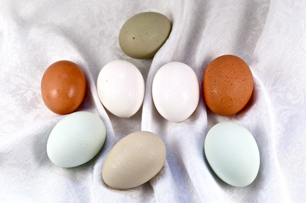 egg color comparison